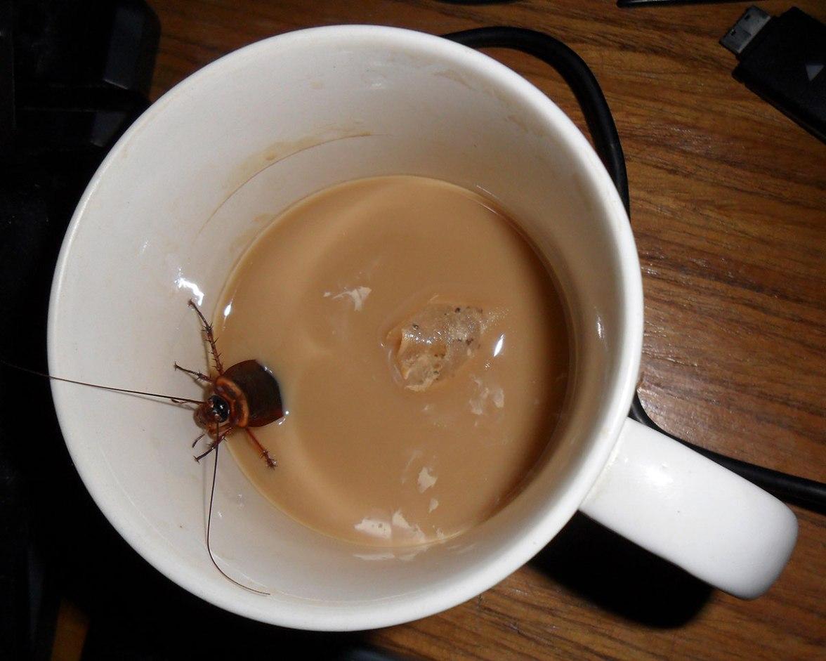 Giant-roach