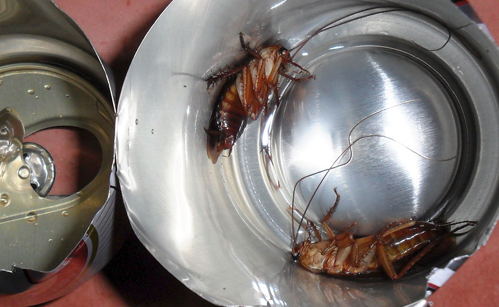 Is this the ultimate DIY roach motel? – Art & criticism by eric wayne