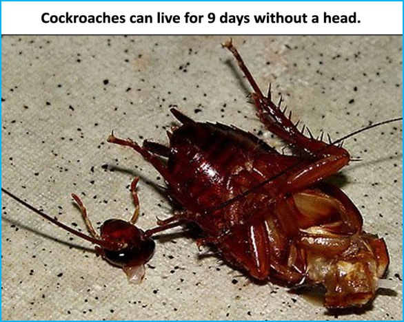 Cockroaches-can-live-for-9-days-without-a-head.