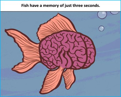 Fish-have-a-memory-of-just-three-seconds