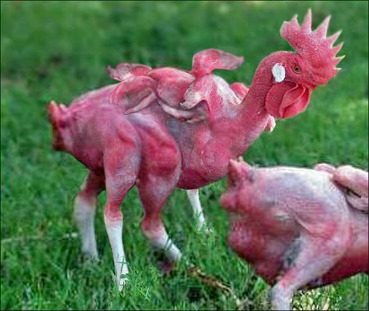 Mutant-Chicken-Final-copy