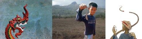 Lizards of Laos