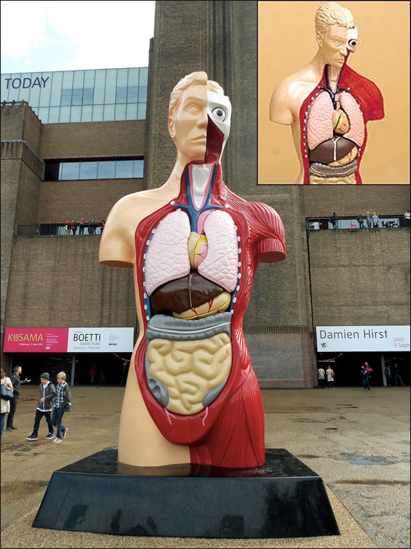 Damien Hirst Hymn and Toy gory: Humbrol's anatomical model