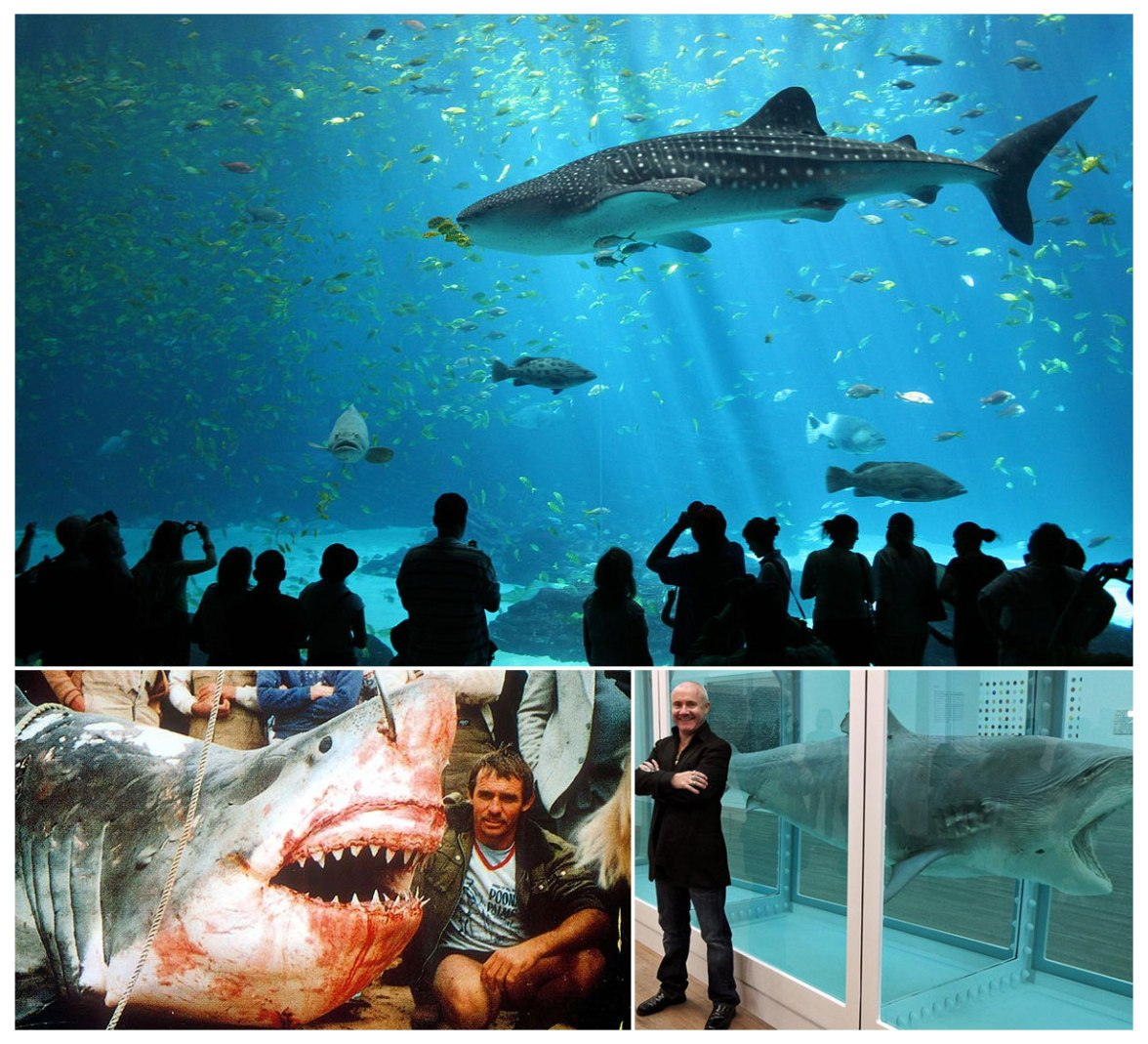 Sharks in aquariums versus live caught versus Damien Hirst shark in tank