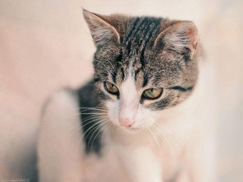 Soft-kitty---Warm-kitty
