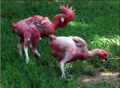 KFC Mutant Chicken 2