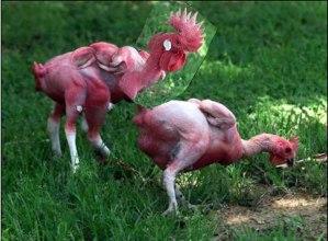 KFC Mutant Chicken 3