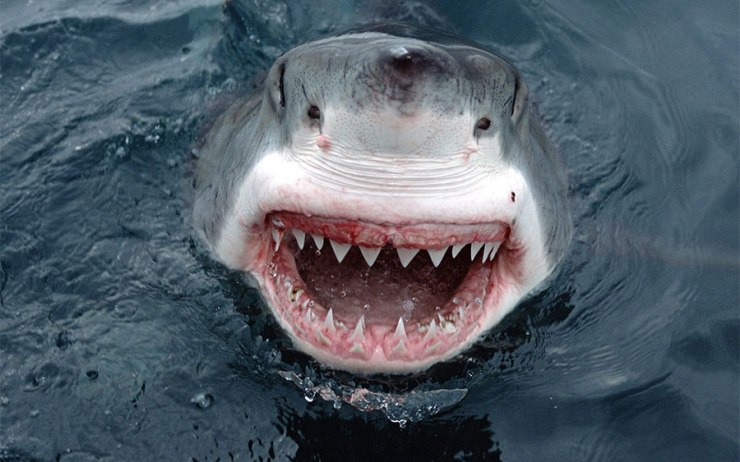 GW-shark