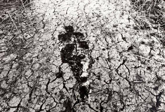 ana-mendieta-untitled-silueta-series-1978