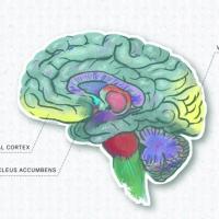 Brain Scans Vindicate Visual Art