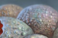 Detail-02